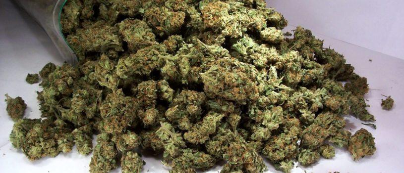 Что необходимо знать о марихуане